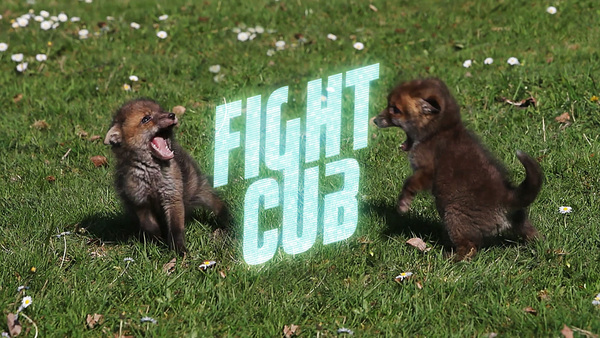The first rule of Fight Cub: never stop being adorable.